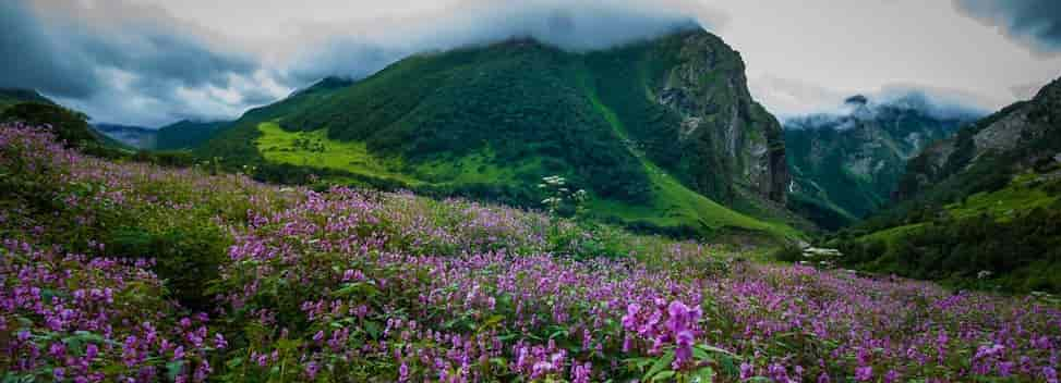 Valley of Flower Himalaan View